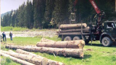 Photo of Лісгосп вкрав ліс і обвинувачує в цьому законного власника